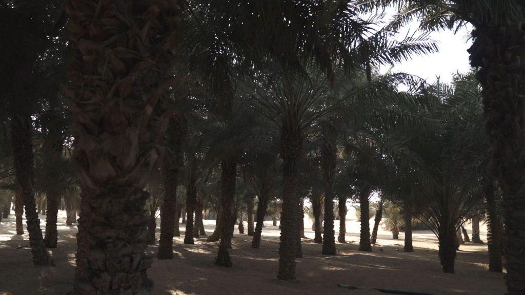 Luxight Desert